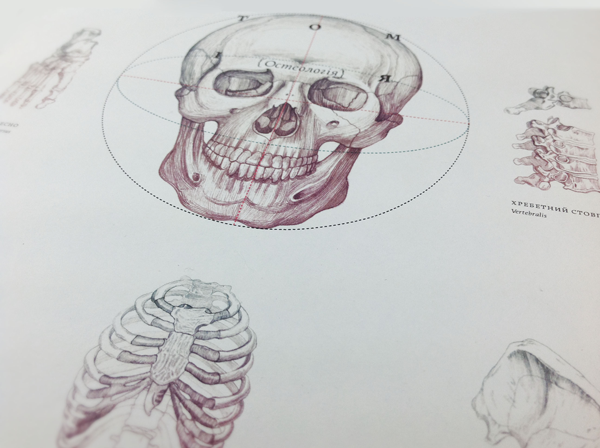 anatomy osteology book design inspiration medical diagram skull